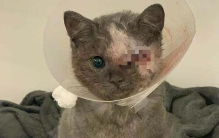 Eyela la gatta ustionata senza un occhio e con un buco nel cuore cerca casa (Foto Facebook)