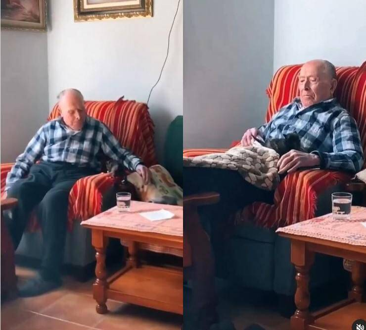nonno gatto video