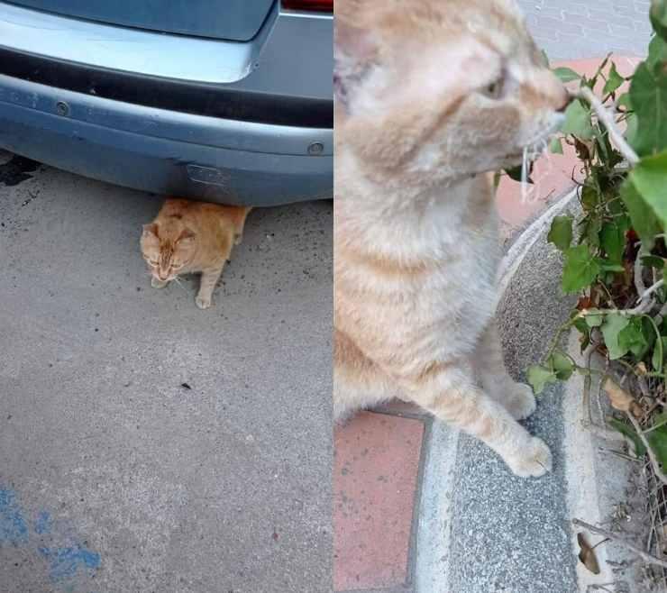 gatto ritorna crollo casa