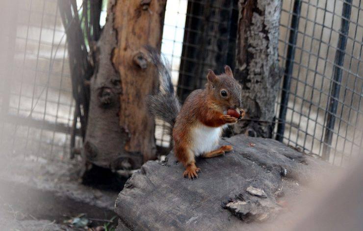 gabbia adatta allo scoiattolo giapponese