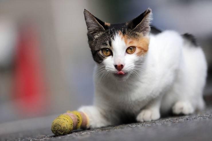 gatto ferito (foto Pixabay)