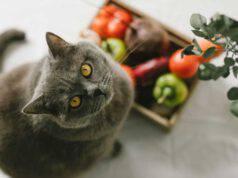 gatto può mangiare barbabietole