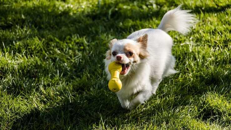 giochi influenzano il rapporto tra cane e uomo