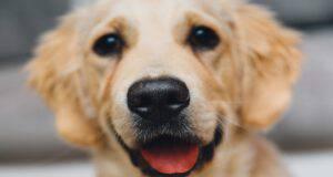 Il cane e la fame eccessiva