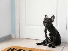 cane si siede vicino alla porta
