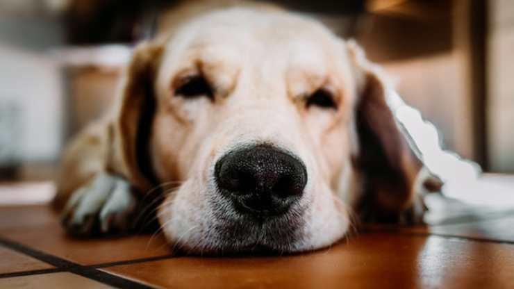 ipercheratosi cane