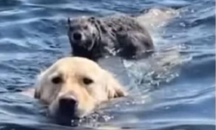 Amicizia cane marmotta (Foto video)