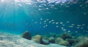 Giornata internazionale del Mar Mediterraneo