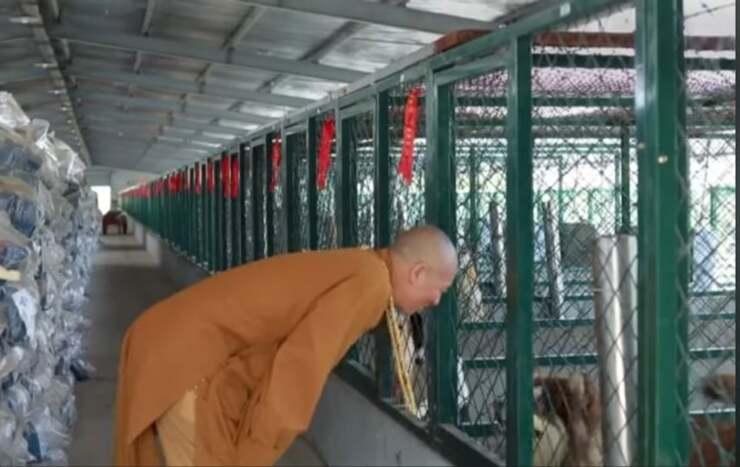 alcuni dei cani salvati grazie al monaco (Screen Video )