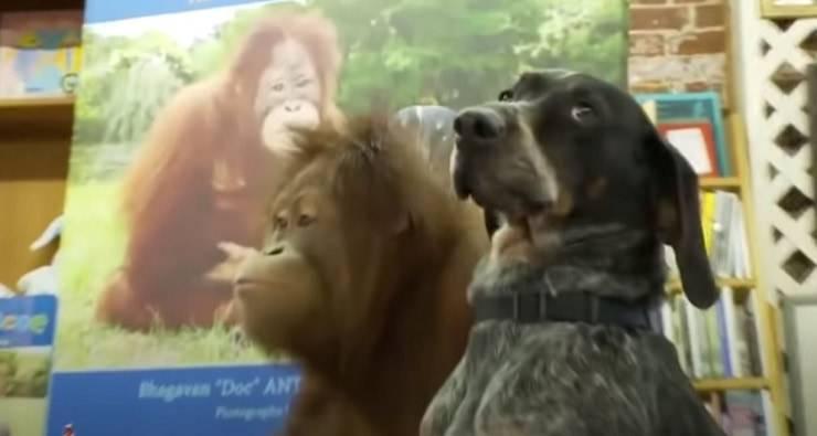 storie di amicizia tra animali