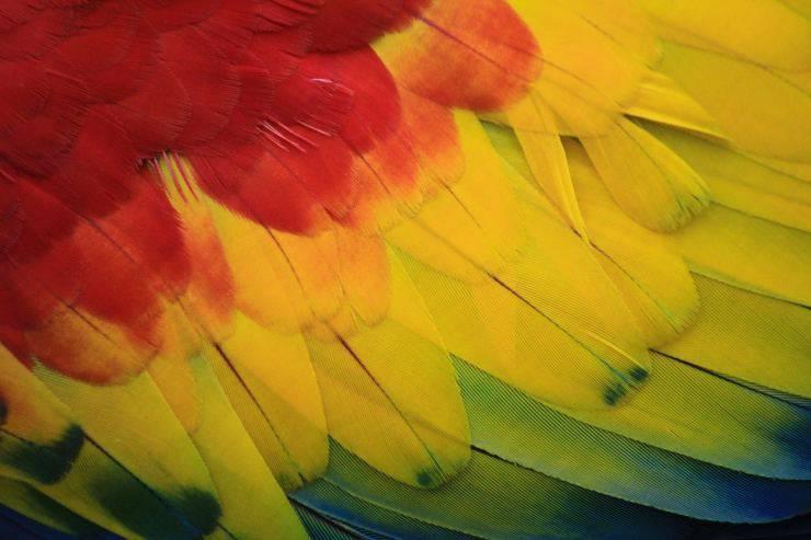 I parassiti degli uccelli sulle piume