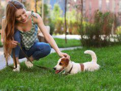 passeggiare con il cane in estate