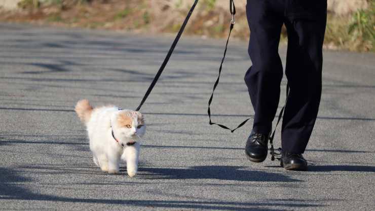 passeggiare con il gatto in estate