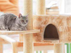 perché ai gatti piacciono i tiragraffi