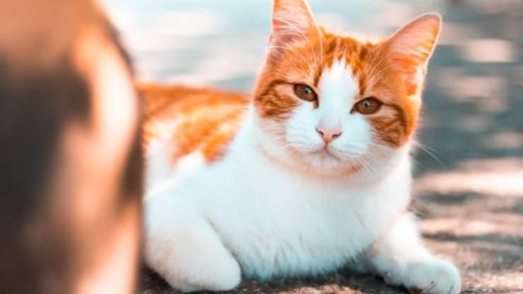 perché gatti sbattono le palpebre