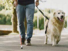 perché non accarezzare cane guida
