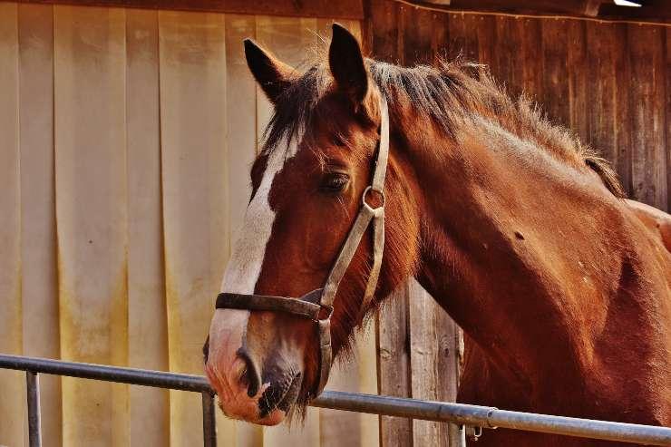 L'ulcera gastrica nel cavallo