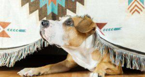 rumori che danno fastidio cani