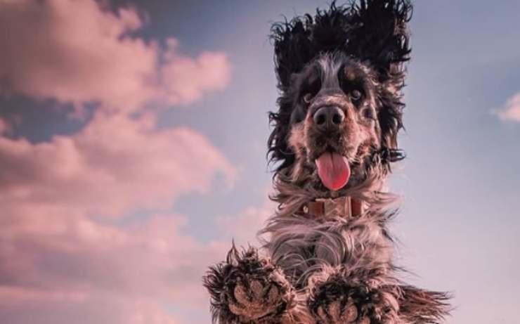 Il salto del cane (Foto Instagram)