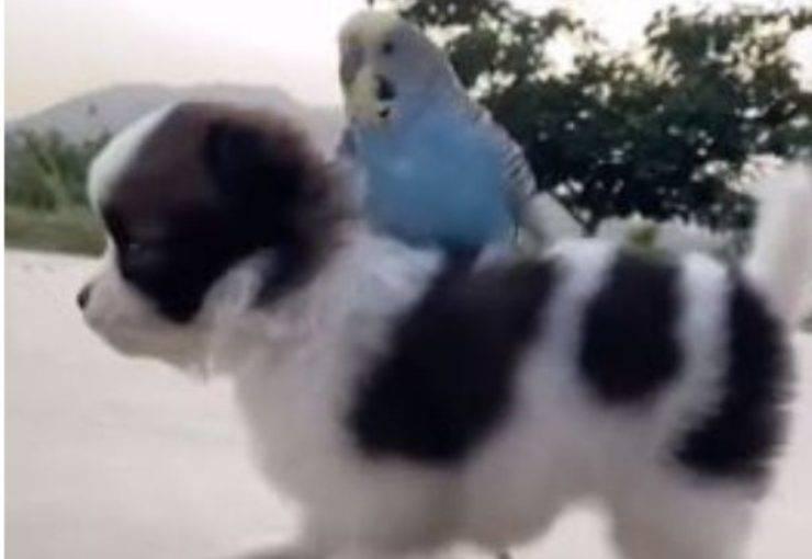 Il pappagallo e il cane (Foto video)