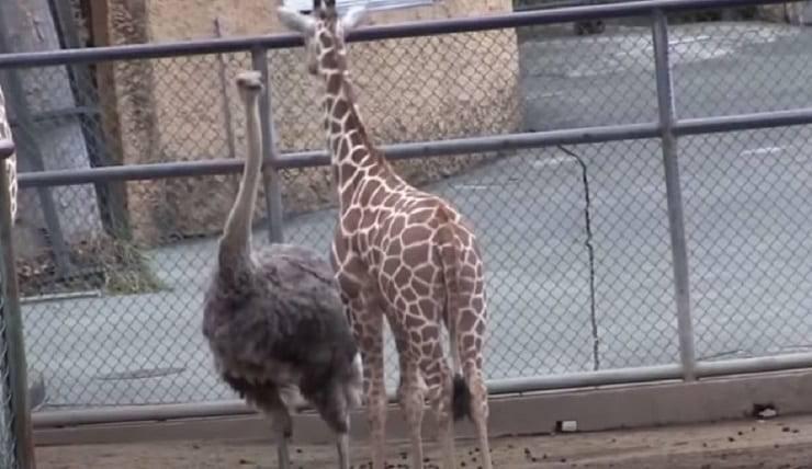 amicizia tra animali