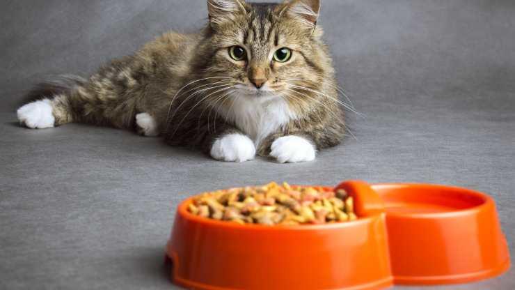 tenere separati acqua e cibo gatto
