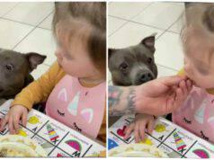 Bimba mangia le verdure solo dopo che il suo cane le assaggia (Screen Instagram)