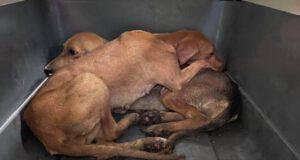 Cuccioli salvati dalla Clinica DUEMARI (Screen Facebook)