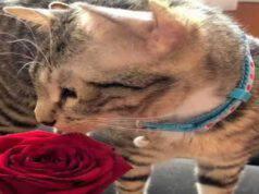 Gattino con quattro orecchie (Screen Facebook)