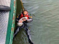 Salvataggio ragazzo e cucciolo tirati fuori dal fiume Hudson (Screen Twitter)