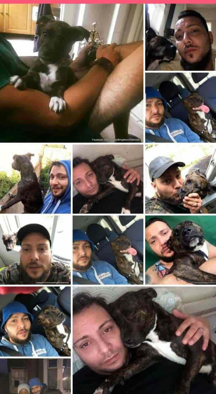 Nennella il cane fugge da casa e viene scambiato per un randagio, la battaglia legale per poterla portare a casa (Foto facebook)