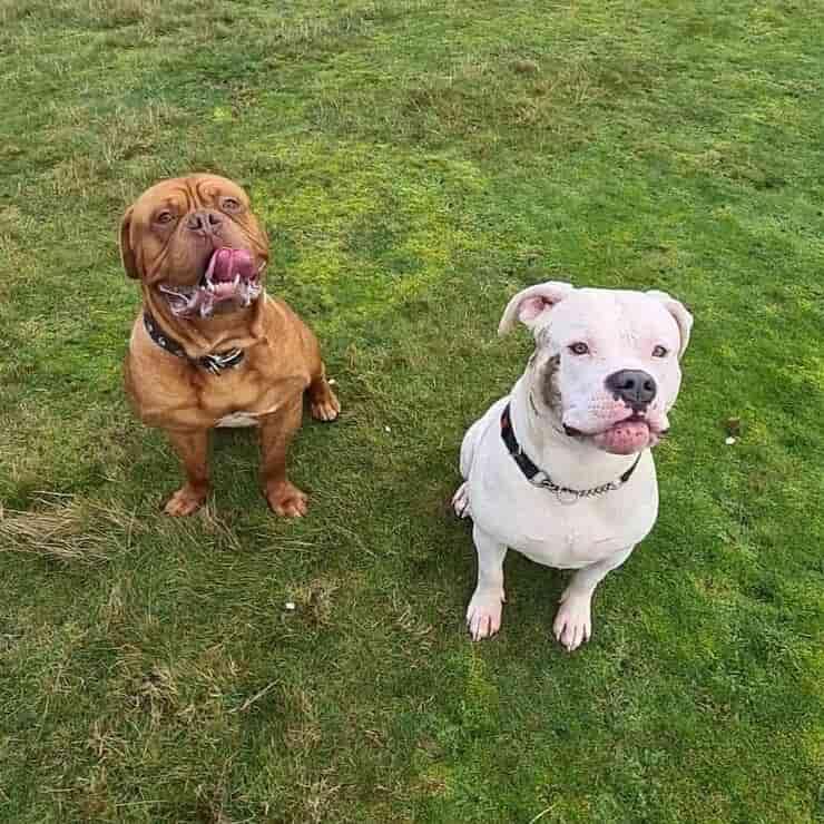 Boris e Steve (Foto Facebook)