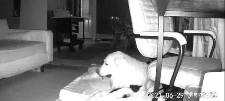 gatto conforta cane insonnia video