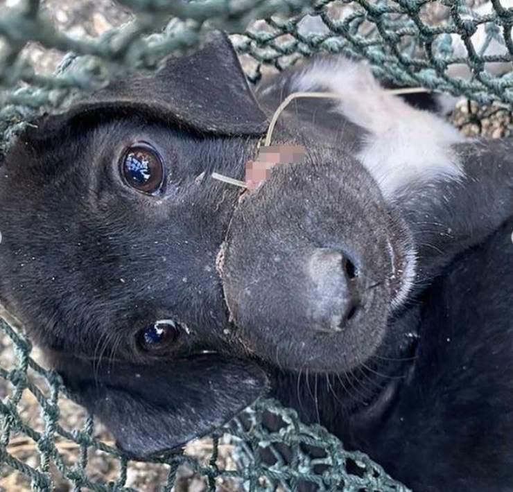 cane muso legato filo pesca