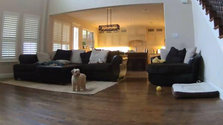 cane solo casa video