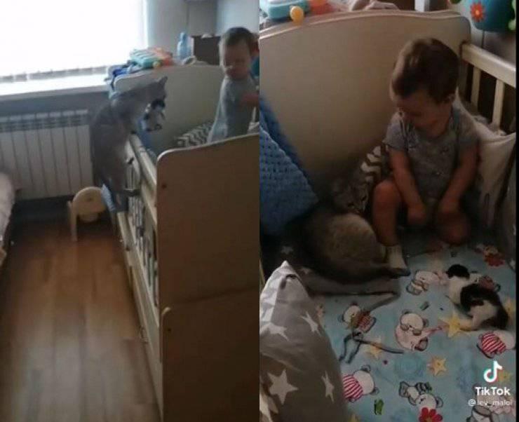 gatta porta cuccioli bambino