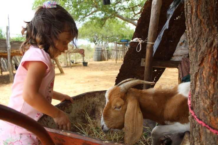 bambina mangiare capra disabile