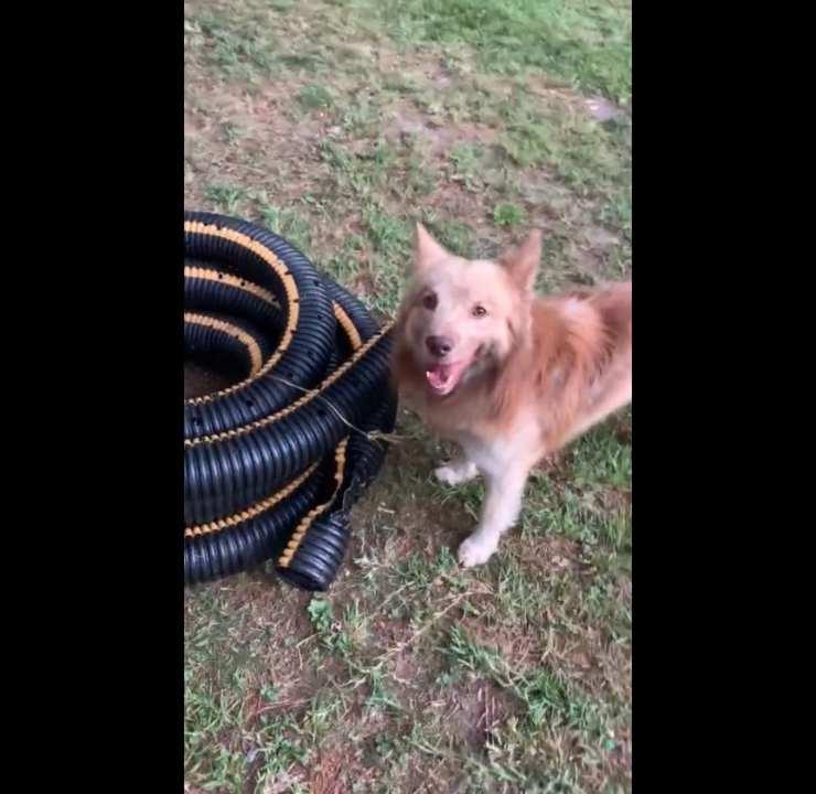 cane Rex micio tubo