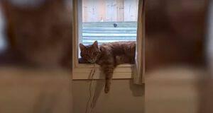 scherzo gatto alexa abbaio cane