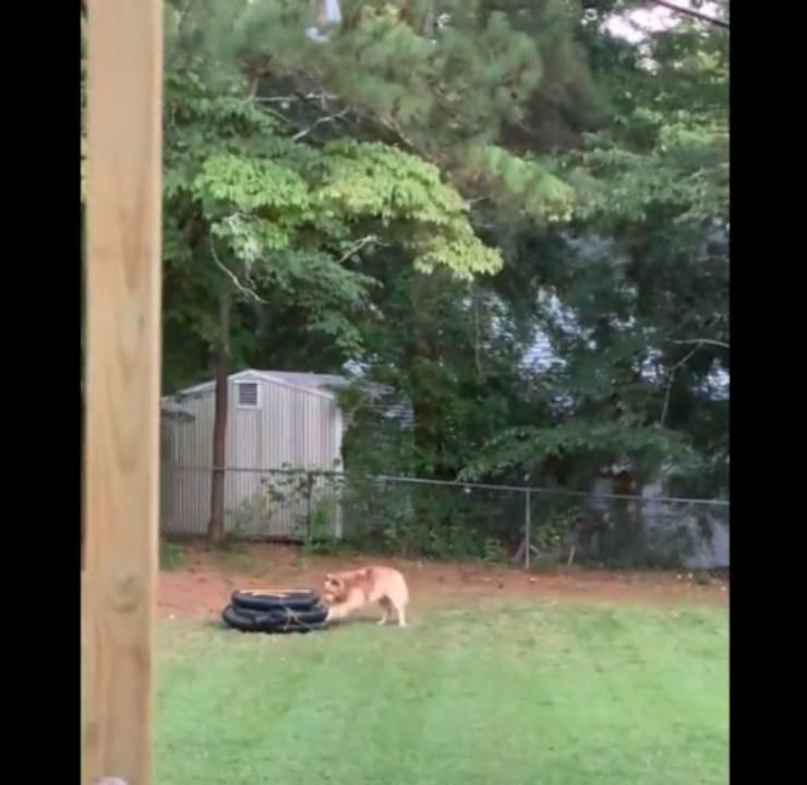 Cane salva gattino intrappolato tubo