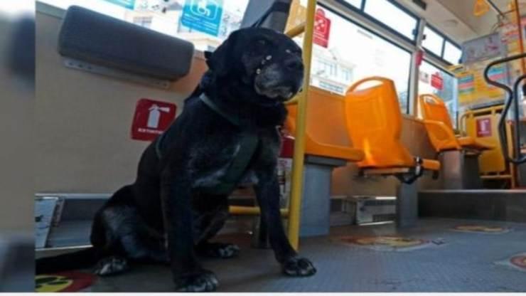 Il cane che sale sugli autobus (Foto Facebook)