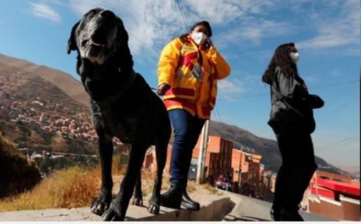 Il cane Alonso (Foto Facebook)
