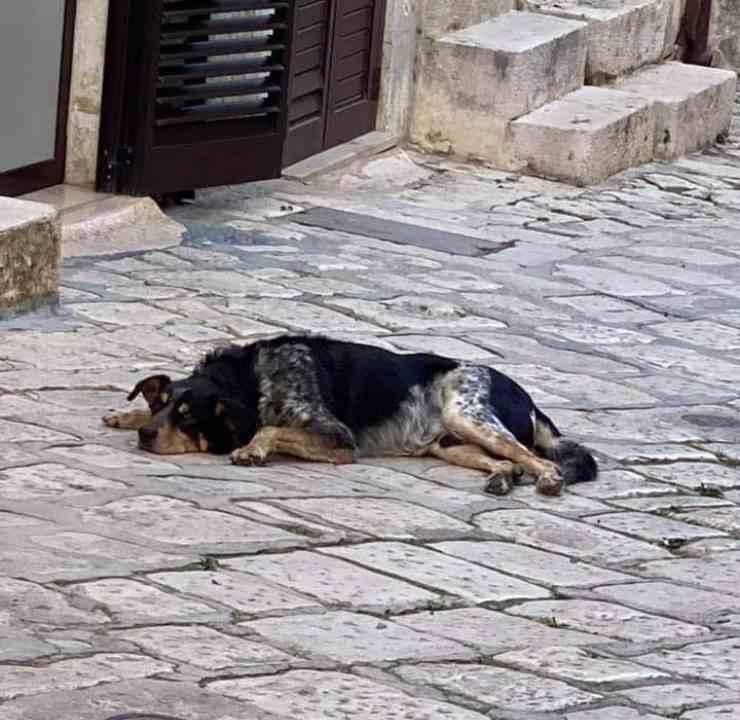 cane torna casa padrone defunto