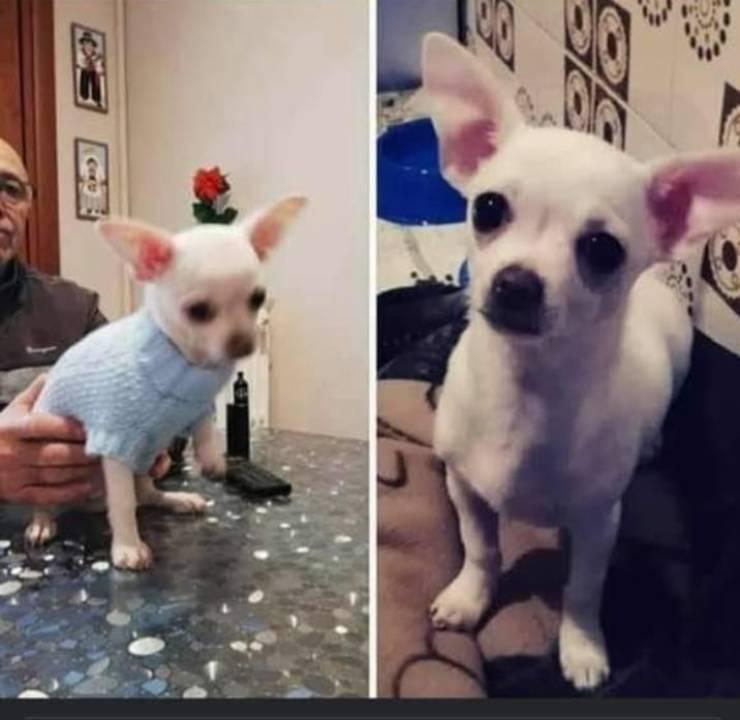 cane proprietario investito bozzolo