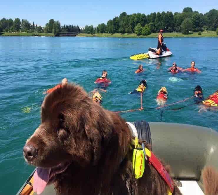 Addestramento cani bagnino (Screen Facebook)
