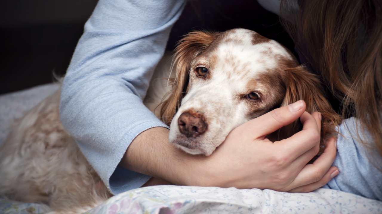 Perché il cane è apatico?