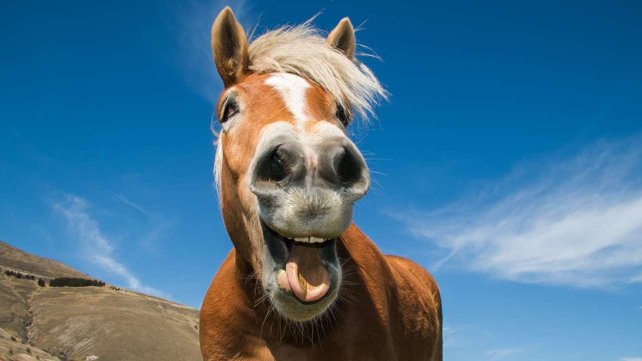 Quante ossa hanno i cavalli?