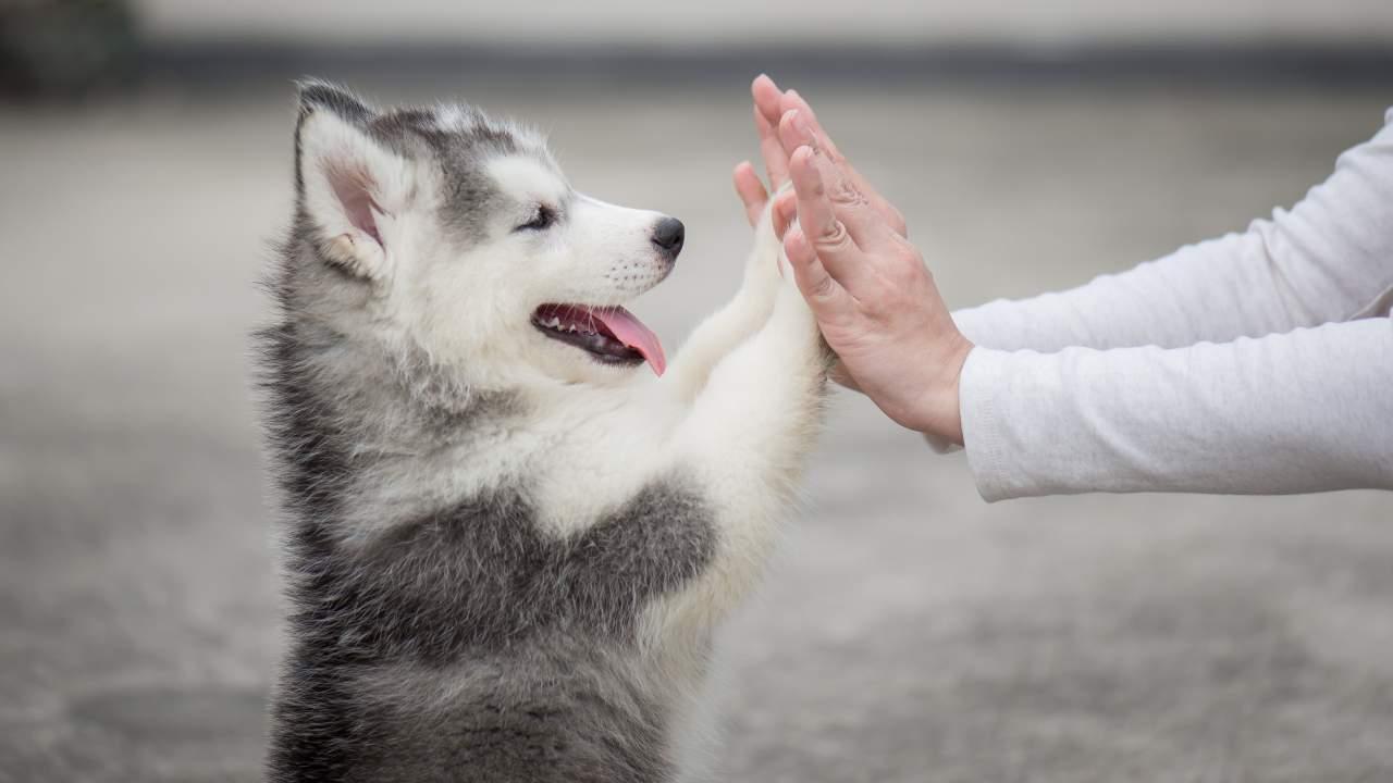 Il senso del tatto nel cane