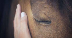 Il lutto nel cavallo