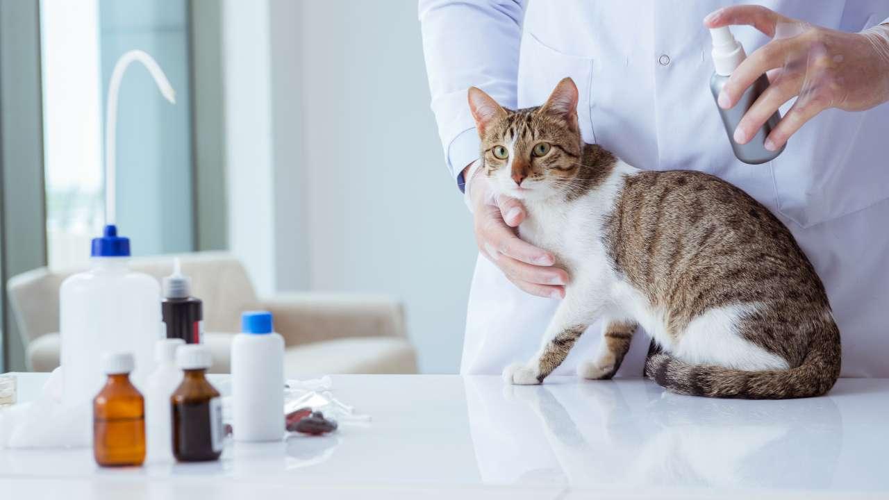 Spray antizanzare per gatti